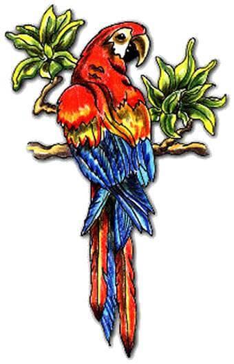 Parrot tattoo design